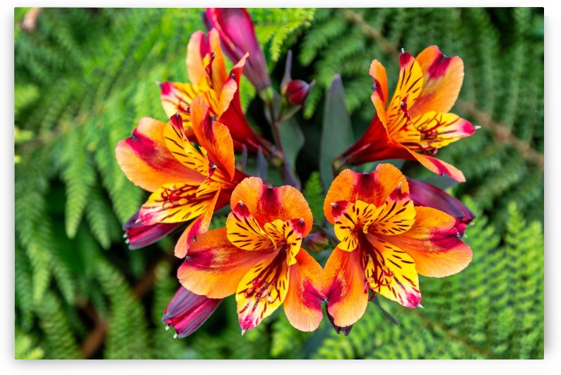 flowers nature by ANA PAULA RIUS