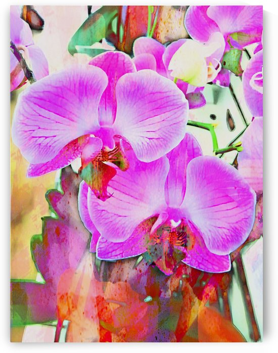 An exploration of orchids by Dorothy Berry-Lound