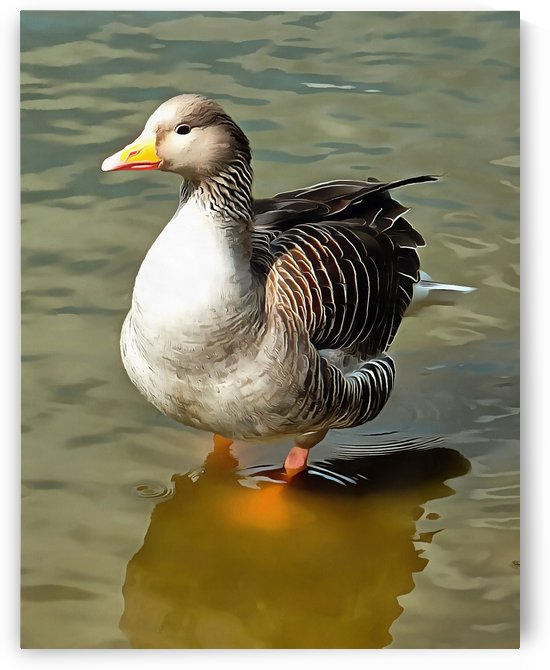 Greylag Goose Front View by Dorothy Berry-Lound
