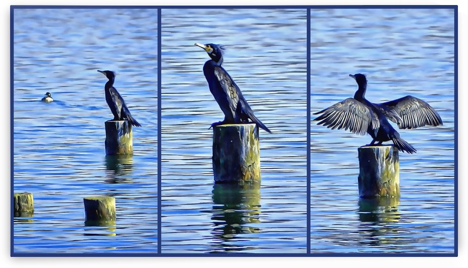 Cormorant Collage by Dorothy Berry-Lound