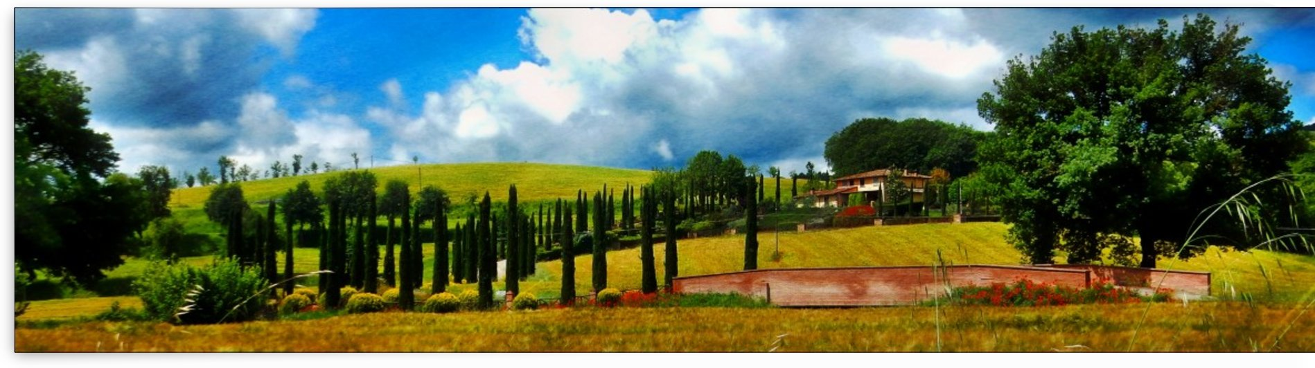 Cypress View Umbria by Dorothy Berry-Lound