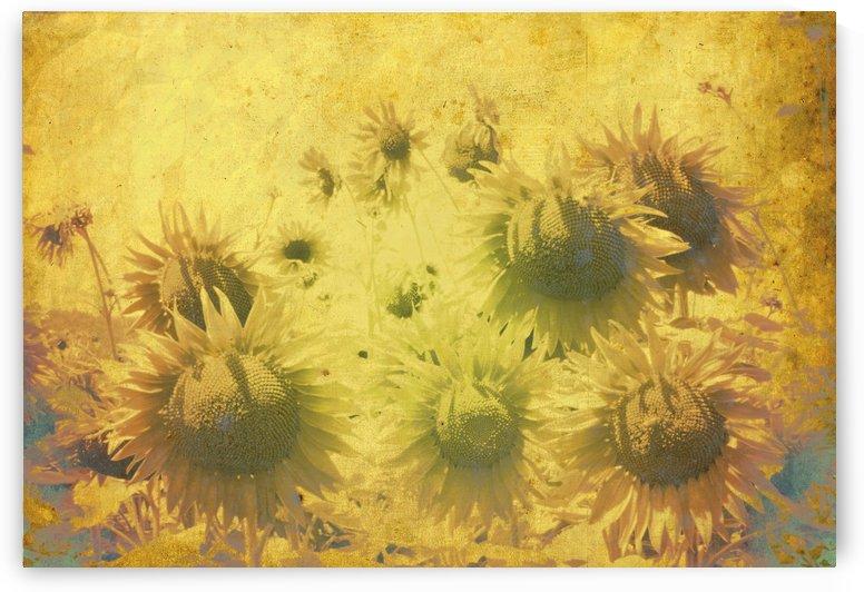 Inner Sunshine by Dorothy Berry-Lound