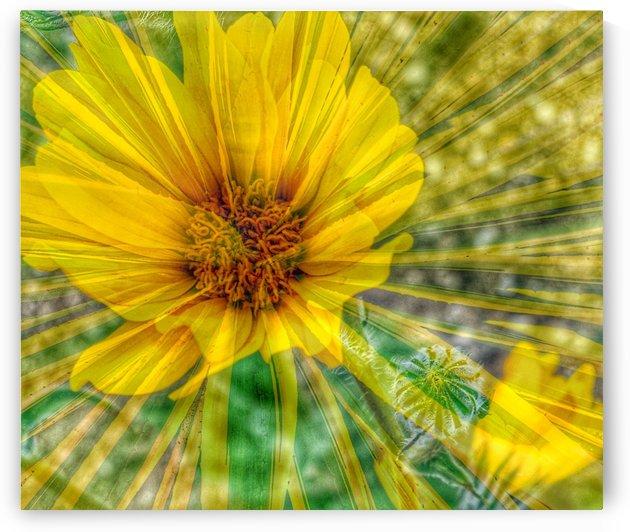Lemon Spritz by Grammydudley