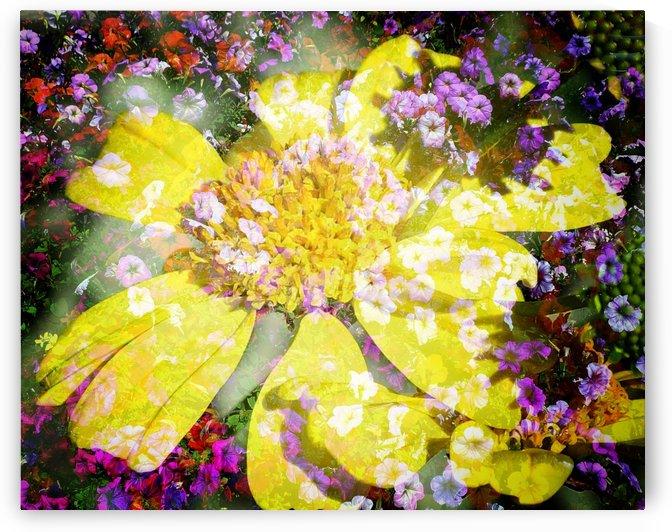 Lemon Rain by Grammydudley