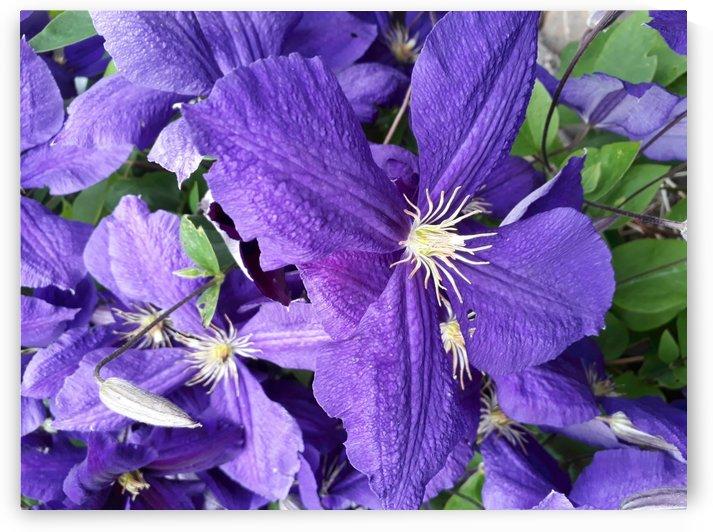 lila  blume by Irene Ragoss