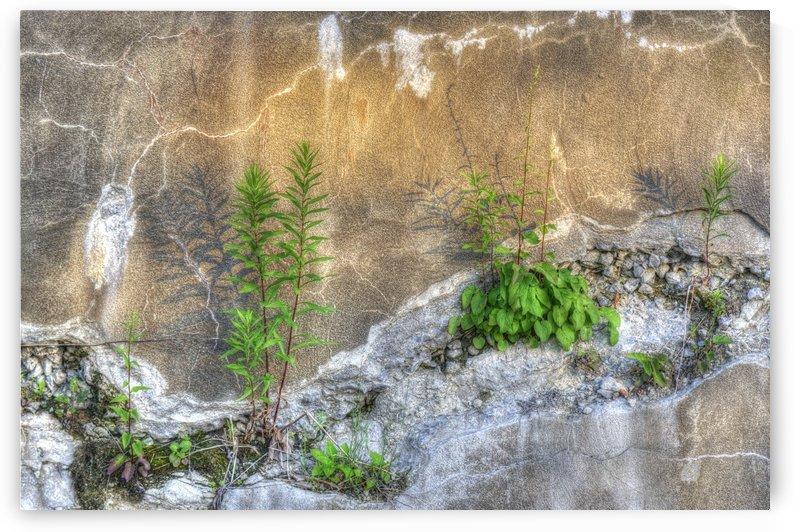 Mauvaise herbe by Christian Bibeau
