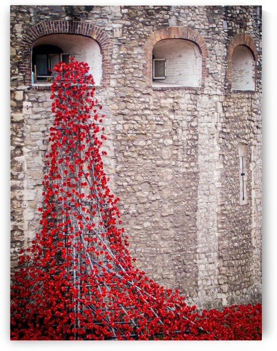 Tower of London Poppies by Belle Smith