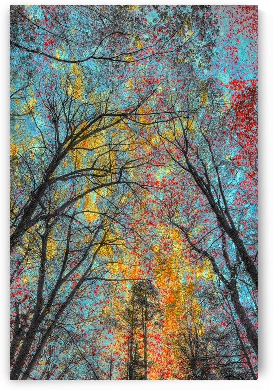 Printemps colore by Christian Bibeau