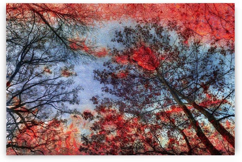 Incendie by Christian Bibeau