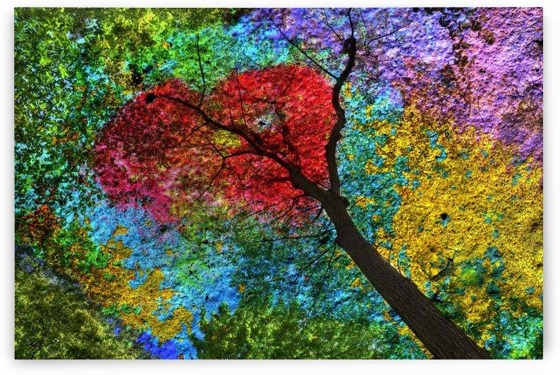 Rouge bouquet by Christian Bibeau