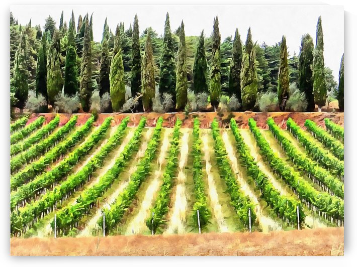 Cypresses and Vineyard by Dorothy Berry-Lound