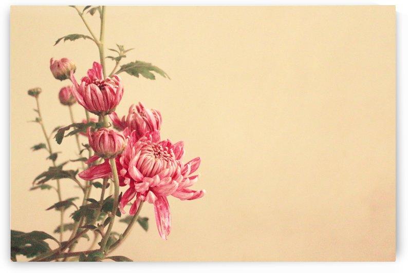 simplicity by Sabrina Seheri