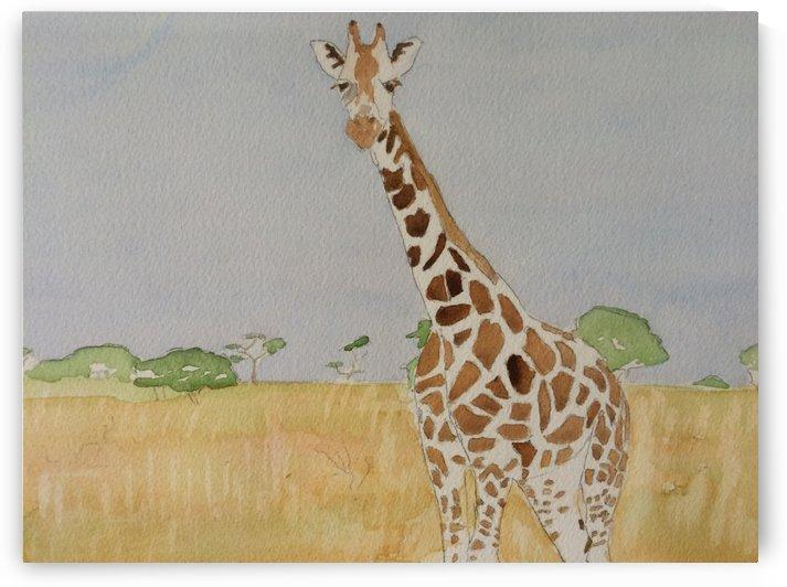 East Africa Giraffe by Adrian Butt