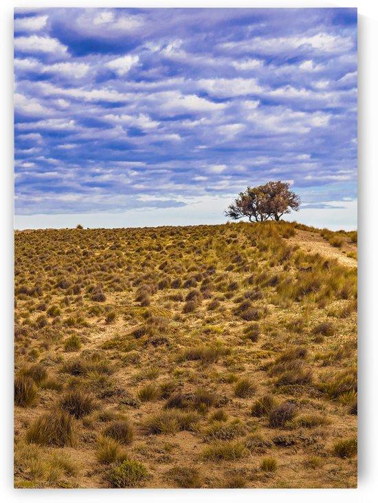 Patagonia Landscape Scene Santa Cruz   Argentina by Daniel Ferreia Leites Ciccarino