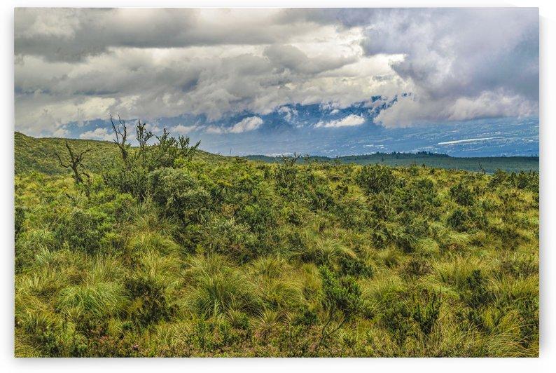 Landscape Scene Cotopaxi National Park Ecuador by Daniel Ferreia Leites Ciccarino