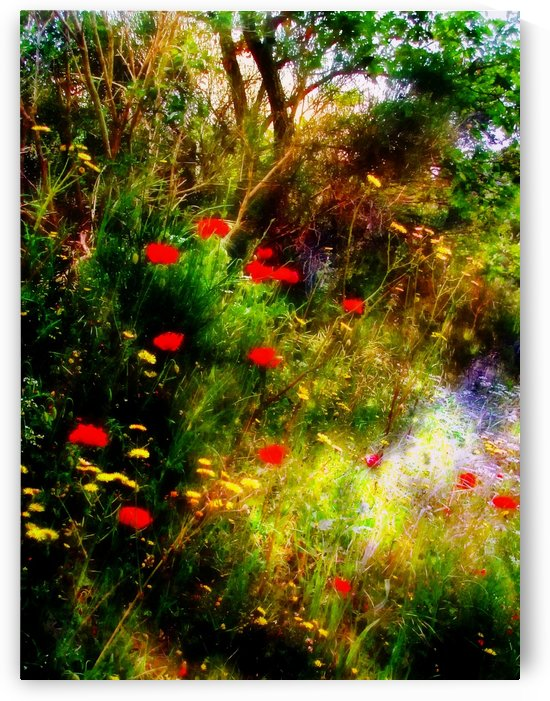 Umbrian Wild Flowers 3 by Dorothy Berry-Lound
