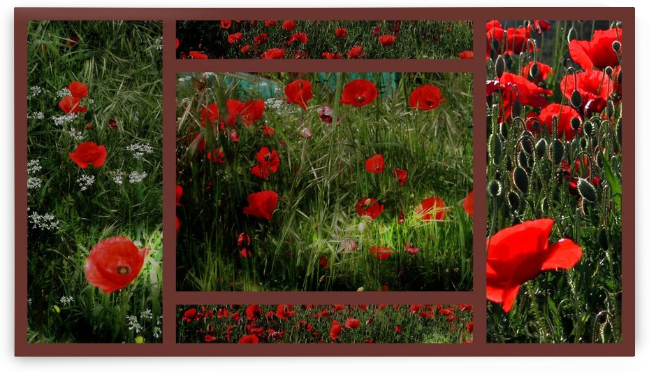 Umbrian Wildflowers 10 by Dorothy Berry-Lound