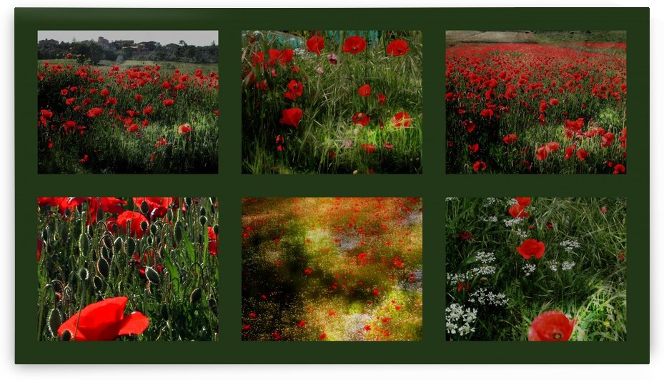 Umbrian Wildflowers 4 by Dorothy Berry-Lound