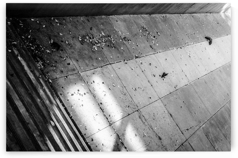 Concrete and Leaves by David Pinter