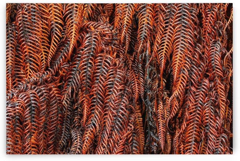 Orange Fern by Sebastian Schuster