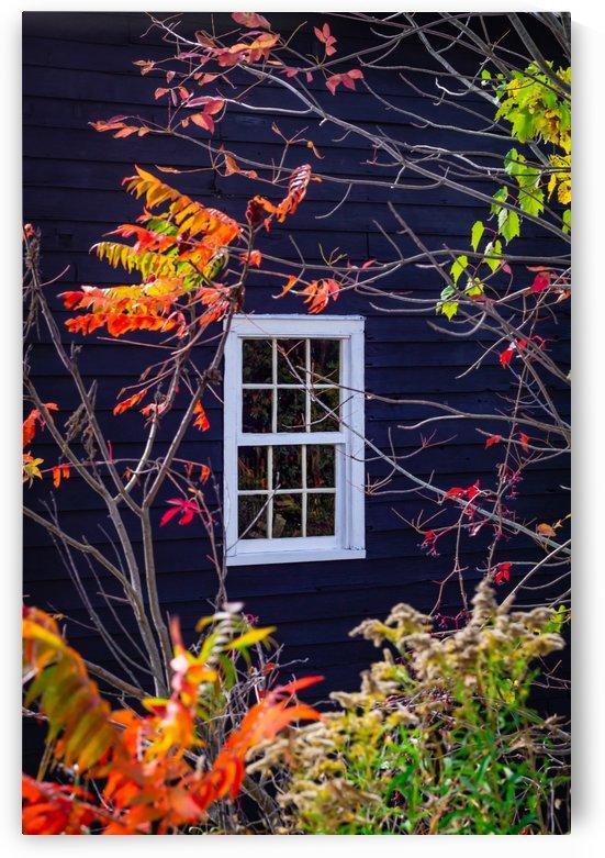 Autumn Window by MumbleFoot