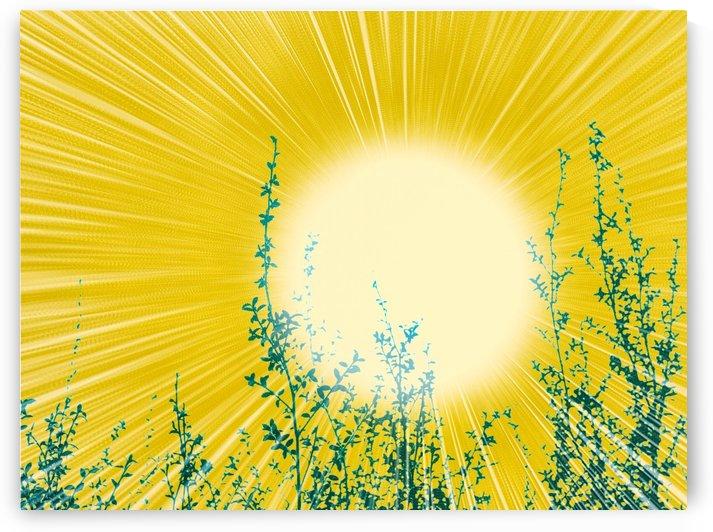 Sun by Sebastian Schuster