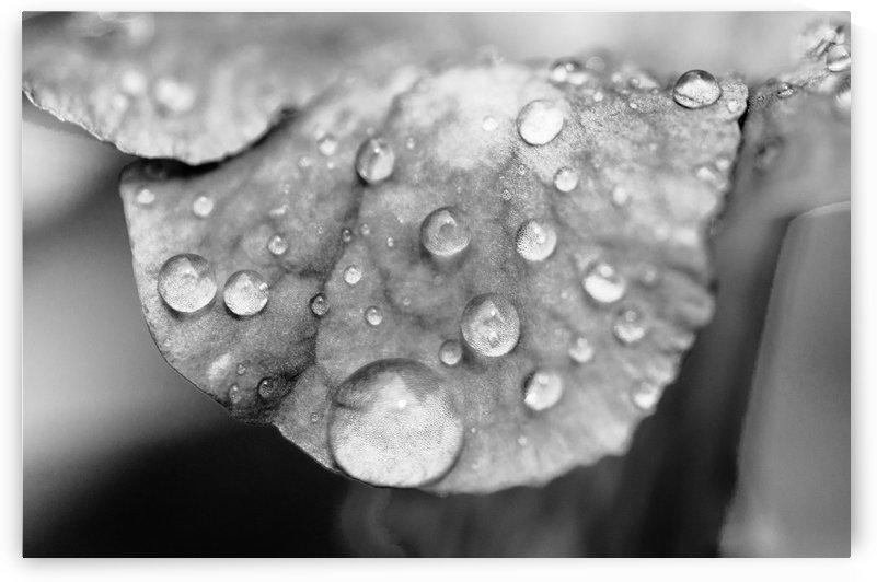 Droplets on Leaf by David Pinter