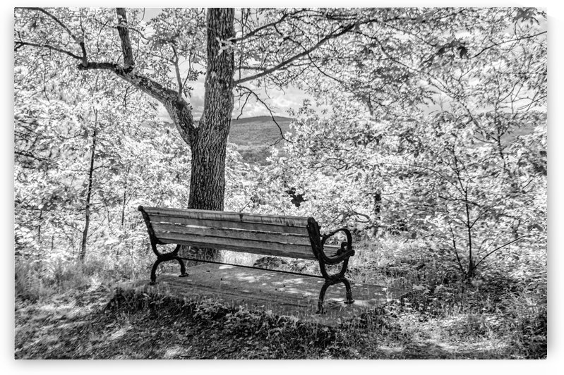 Shaded Bench Under Tree by David Pinter