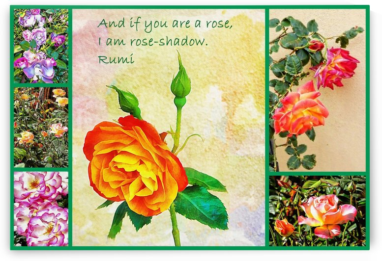 Rose Collage by Dorothy Berry-Lound