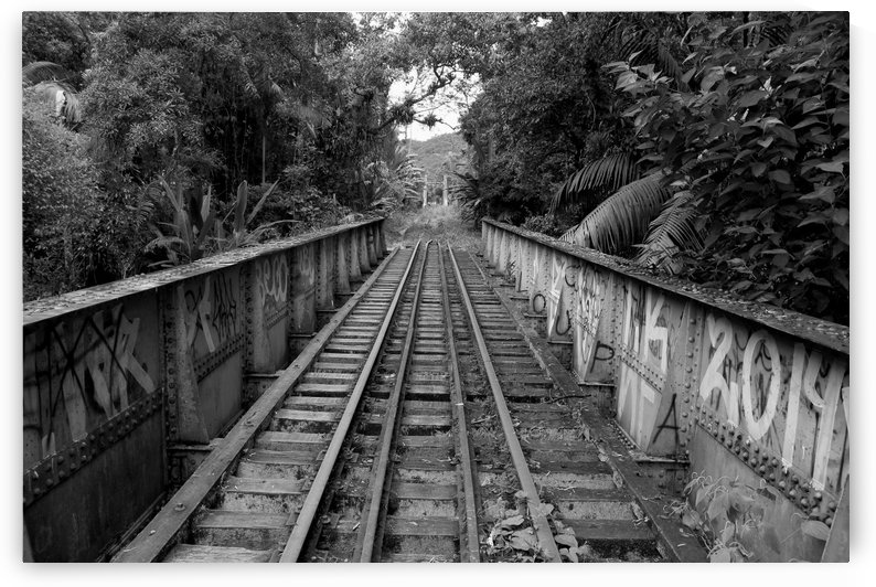 Bridge - XXXVI by Carlos Wood