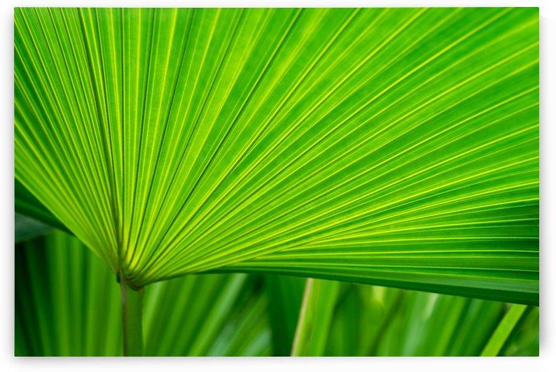 Green Tropical Biophilia - Fan Leaved Palm Tree by GeorgiaM