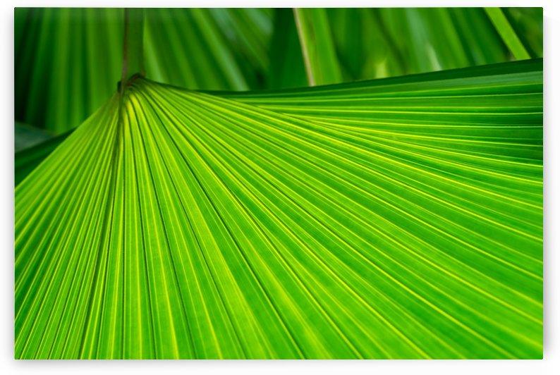 Green Tropical Biophilia - Fan Leaved Palm Tree - Alternate Variant by GeorgiaM