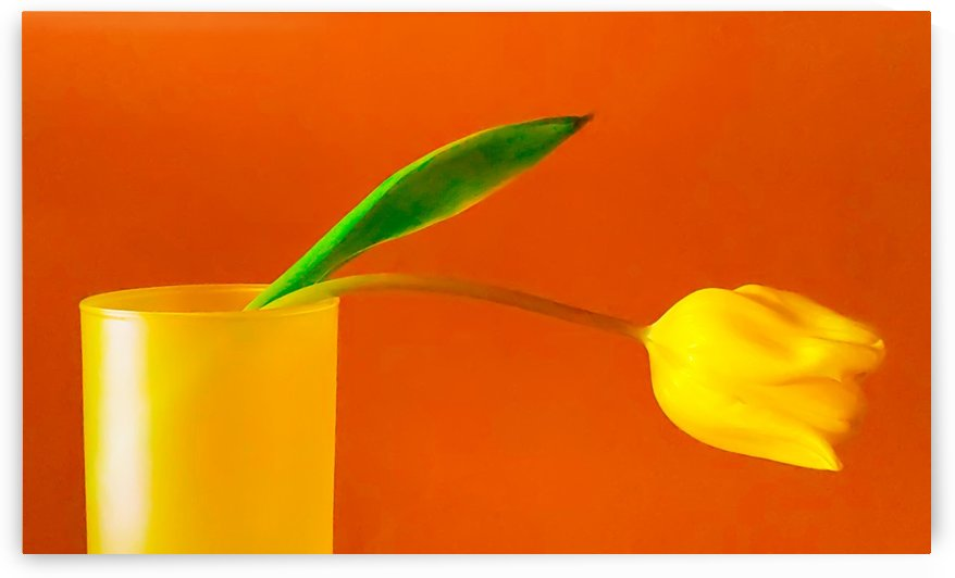 Yellow Tulip Still Life I by Joan Han
