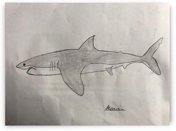 Shark Image by Aarav Gupta