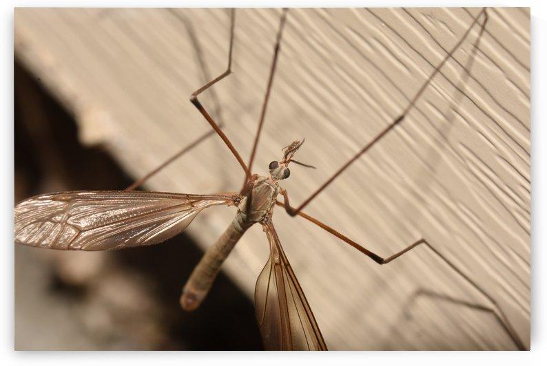 Mosquito Killer by Cameraman Klein