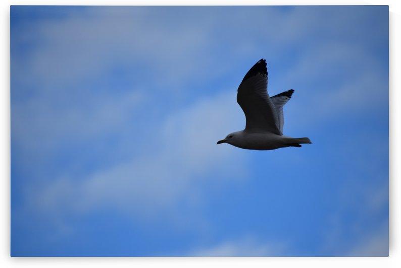 Dark Seagull by Cameraman Klein