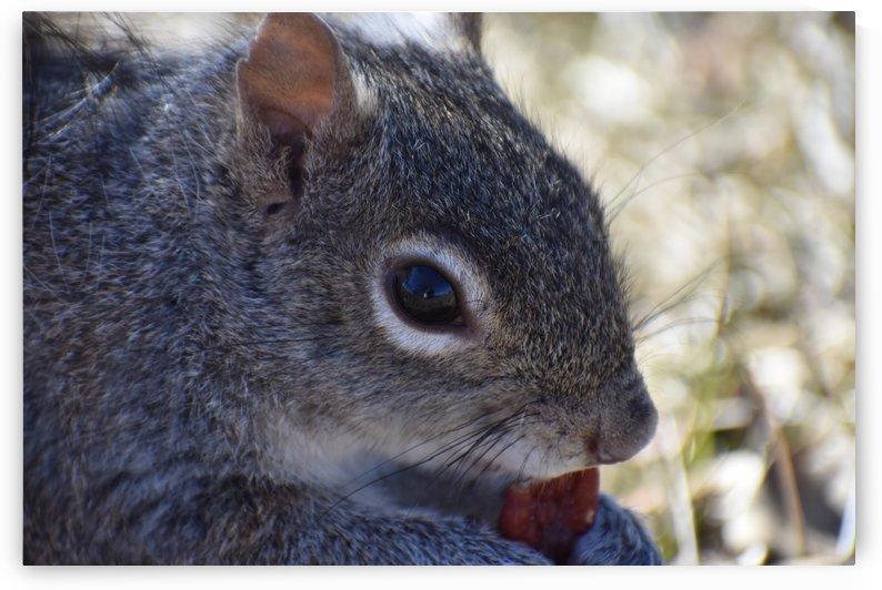 Dark Squirrel with a Nut by Cameraman Klein
