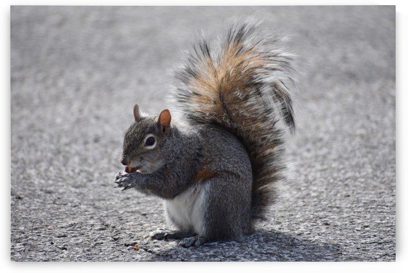 Squirrel by Cameraman Klein