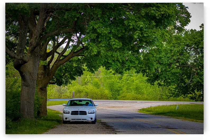 My Car Under A Tree by Phoenix Wilbur