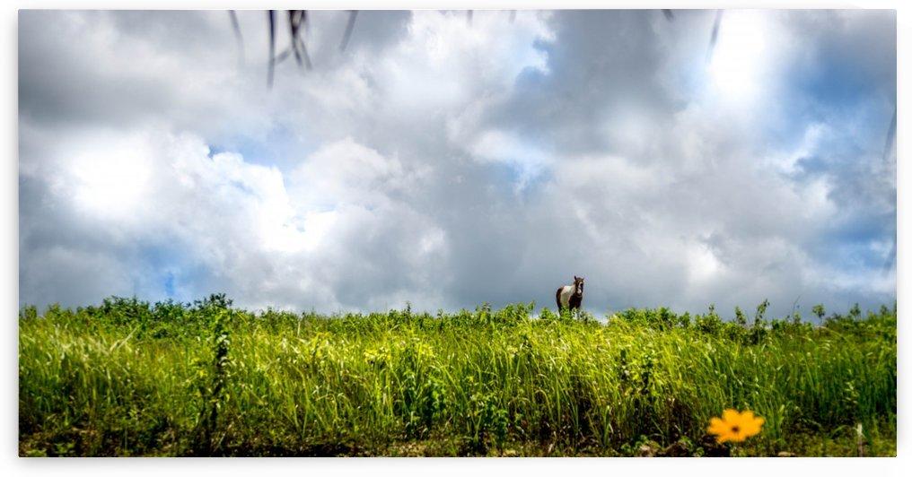 HORSE IN THE HORIZON by Josh Torres