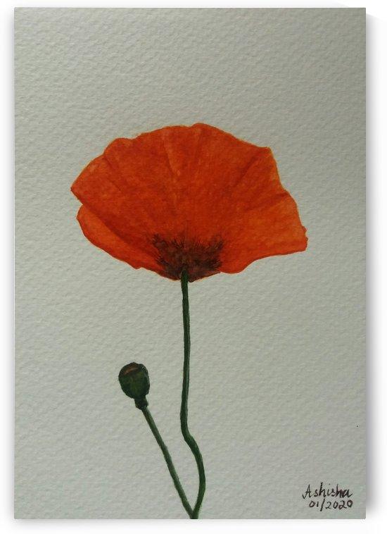 Poppy by Princely Ashisha