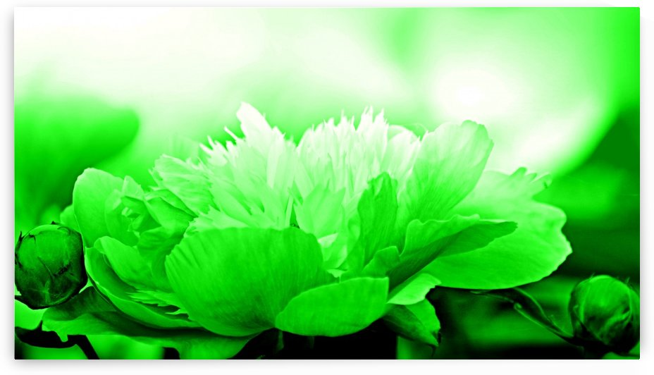 Heavenly Peony Green by Joan Han