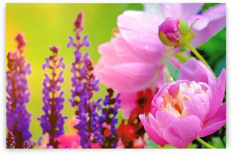 Summer  Garden by Joan Han