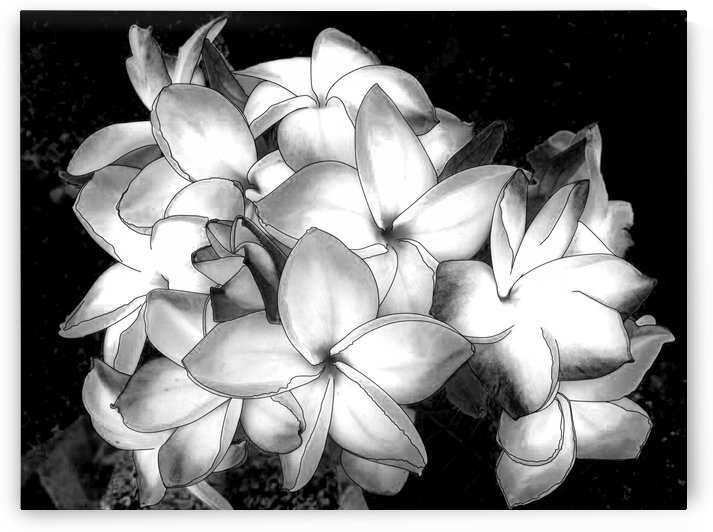 Black and white flower  by Khajohnpan