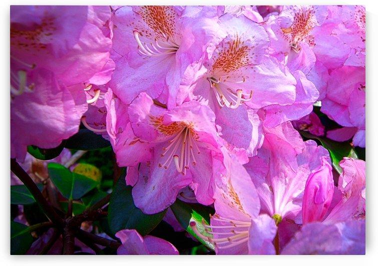 PINK FLOWER by Flodor
