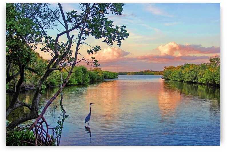 Enjoying The View by HH Photography of Florida