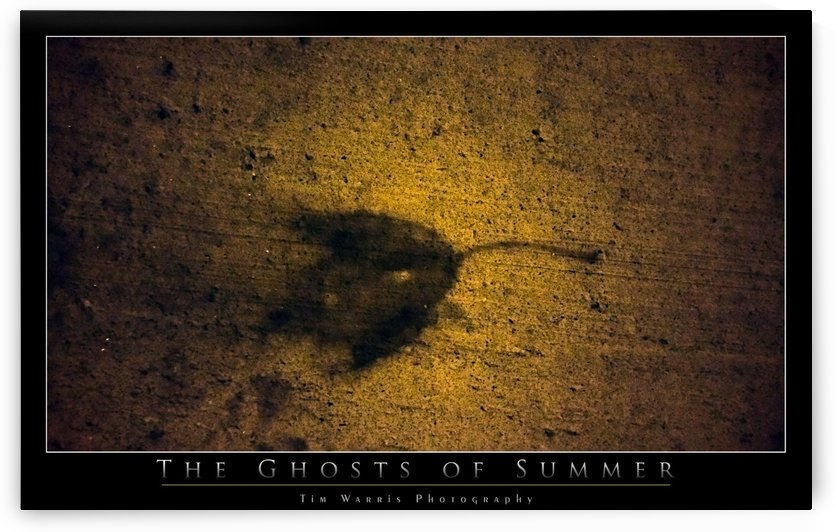 The Ghosts of Summer by Tim Warris Photography