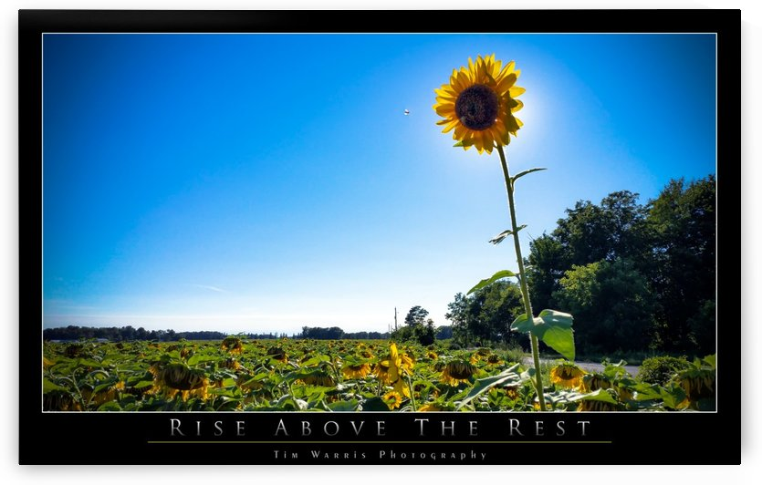 Rise Above the Rest by Tim Warris Photography