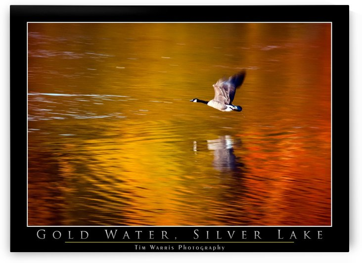 Gold Water by Tim Warris Photography