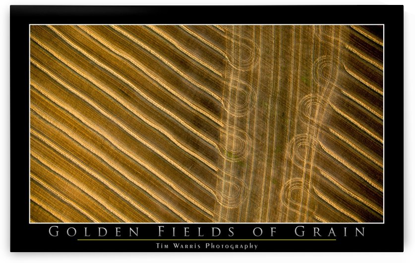Golden Fields of Grain by Tim Warris Photography